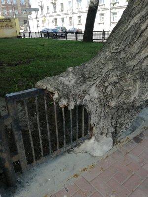 Дерево,_пожирающее_ограду.jpg