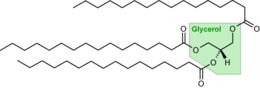 260px-Tripalmitoylglycerol.png